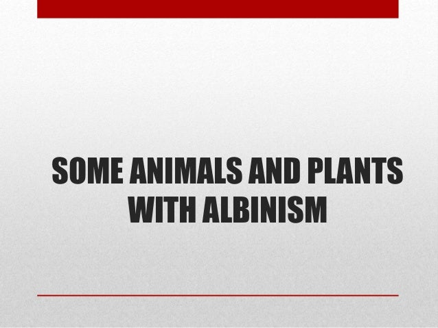 Albinism Albinism In Animals And Plants