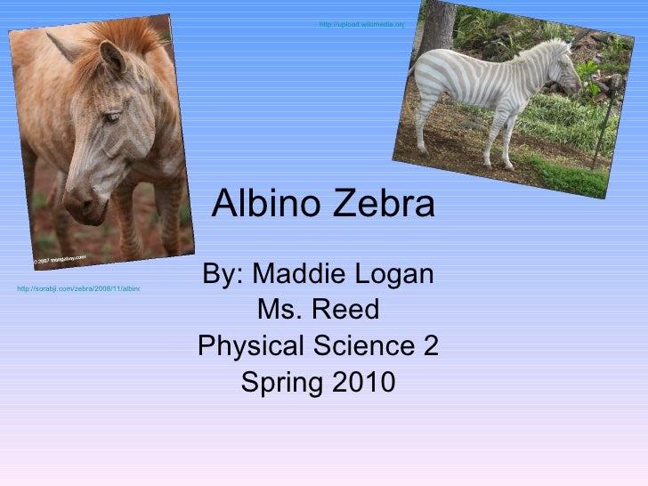 Albino Zebra By: Maddie Logan Ms. Reed Physical Science 2 Spring 2010 http://sorabji.com/zebra/2008/11/albino-zebra.html h...