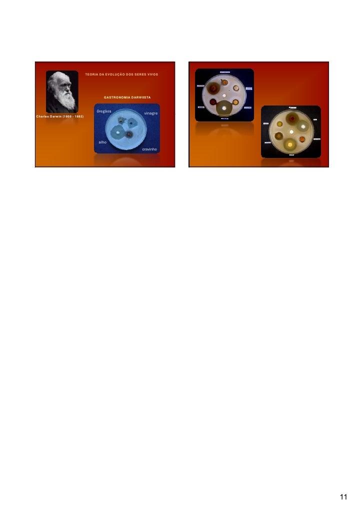 Palestra gastronomia molecular for Gastronomia molecular pdf