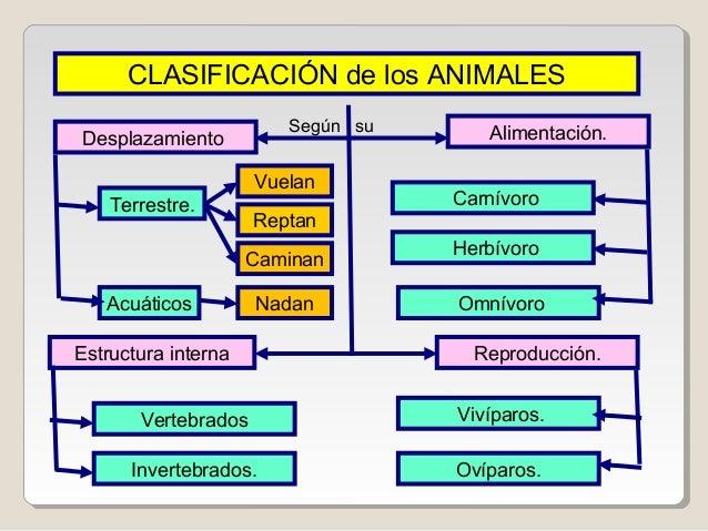 Album animales for Clasificacion de los planos arquitectonicos