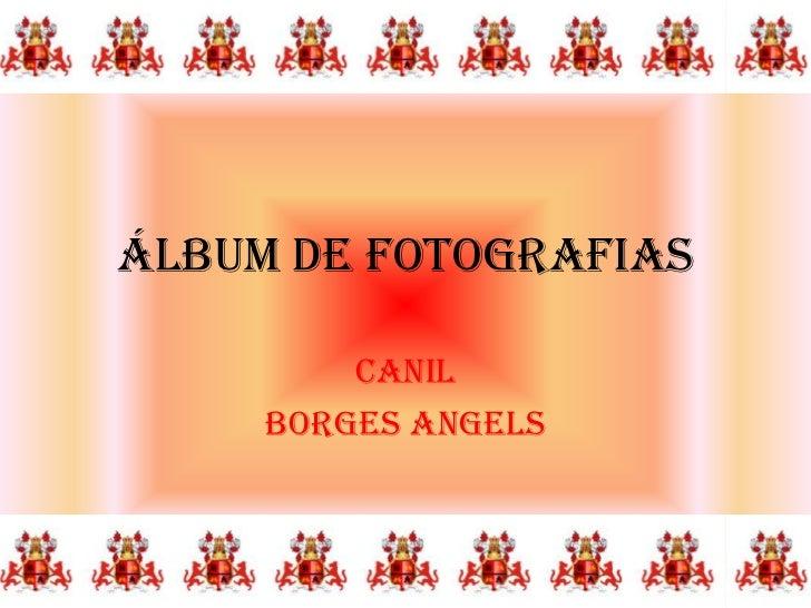 Álbum de fotografias         CANIL     BORGES ANGELS