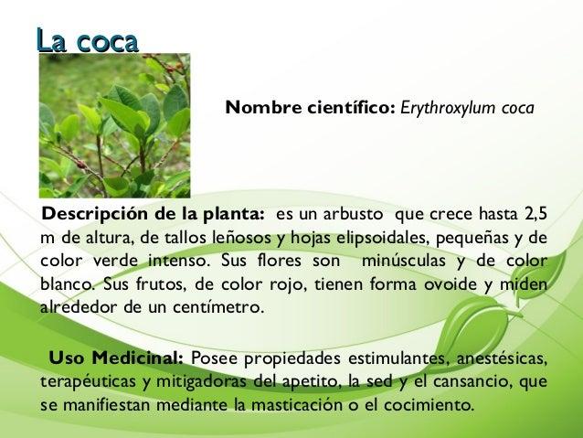 Album de plantas Nombres de plantas comunes