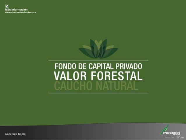 """Álbum FOTOGRÁFICO  Fondo de Capital Privado      """"Valor Forestal"""" Primer semestre     2013"""