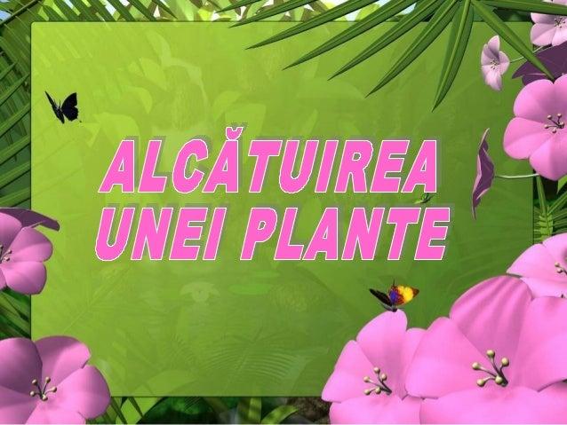 Cele mai multe plante sunt alcătuite din: • rădăcină; • tulpină; • frunze; • floare; • fruct; • sămânţă.