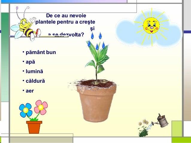 Alcatuirea Plante Cb