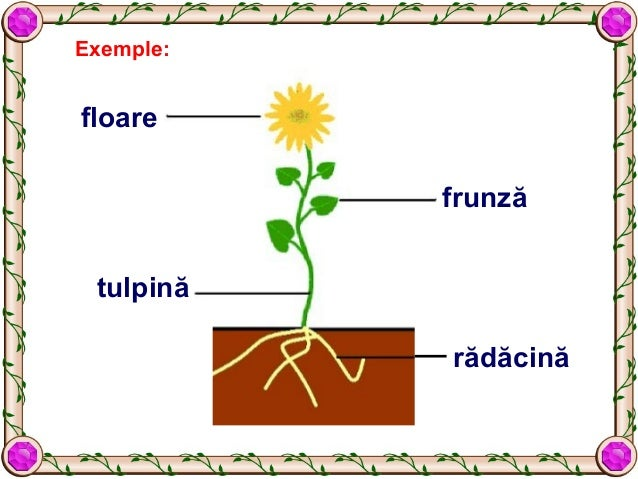 Alcatuirea Plante 638 Cb