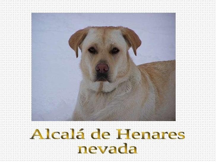 Alcalá de Henares nevada