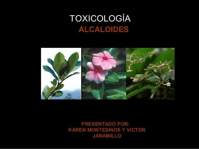 TOXICOLOGÍA  a  ALCALOIDES  PRESENTADO POR: KAREN MONTESINOS Y VICTOR JARAMILLO