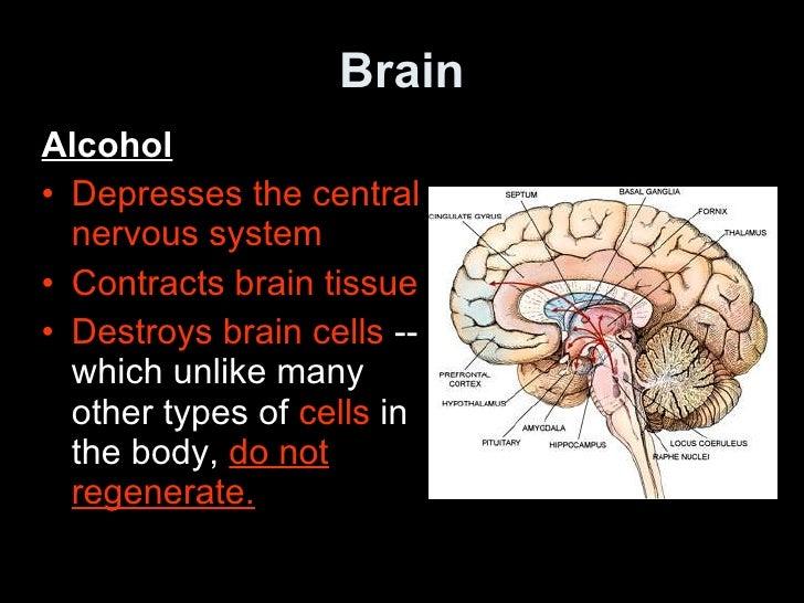 alcohol and autonomic nervous system
