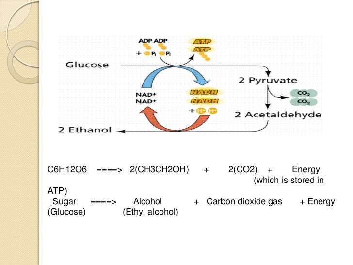 sugar fermentation The advent of industrial fermentation in 1897 the discovery that enzymes from yeast can convert sugar to alcohol lead to industrial processes for chemicals such as.