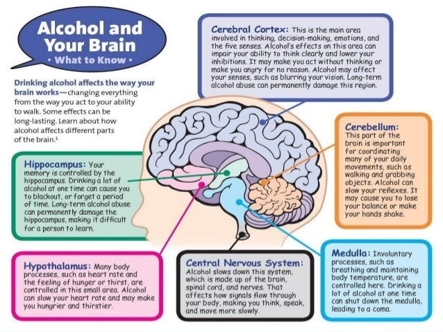 How does alcohol affect the Nervous System