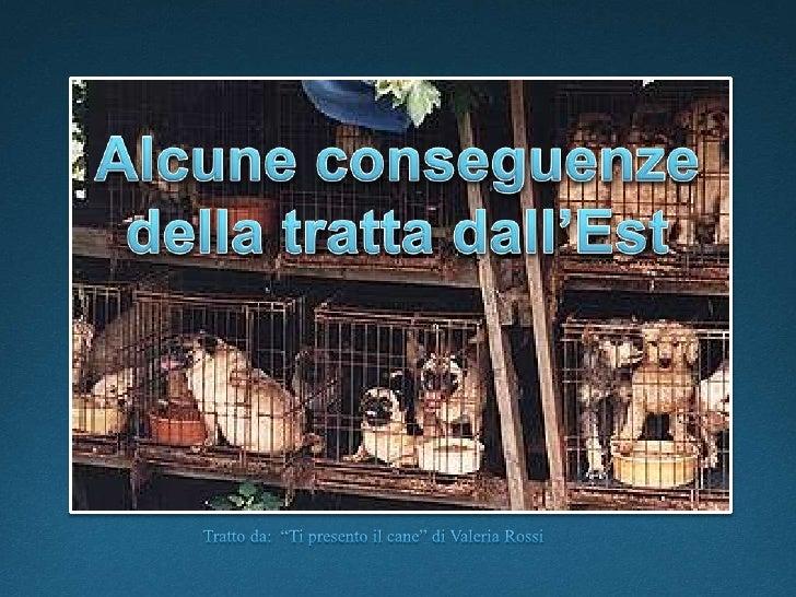 """Alcune conseguenze della tratta dall'Est<br />Tratto da:  """"Ti presento il cane"""" di Valeria Rossi<br />"""