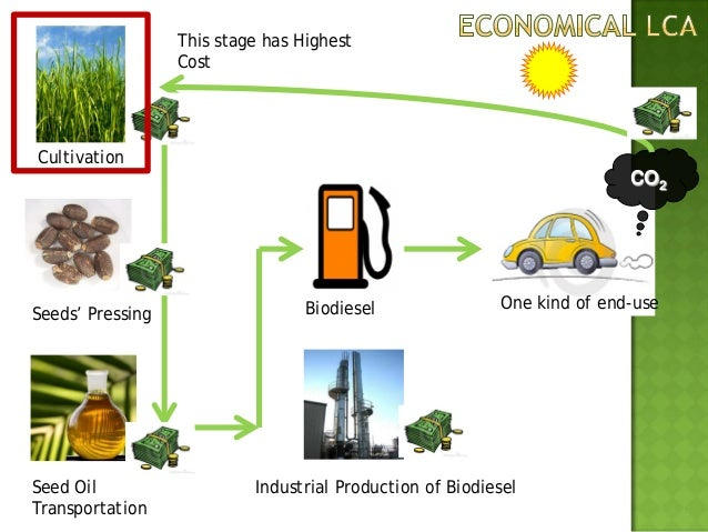 Energy Life Cycle Analysis of Biodiesel
