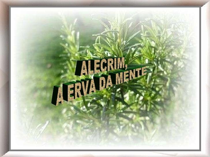 Chá de alecrim!    Alecrim ALECRIM, A ERVA DA MENTE
