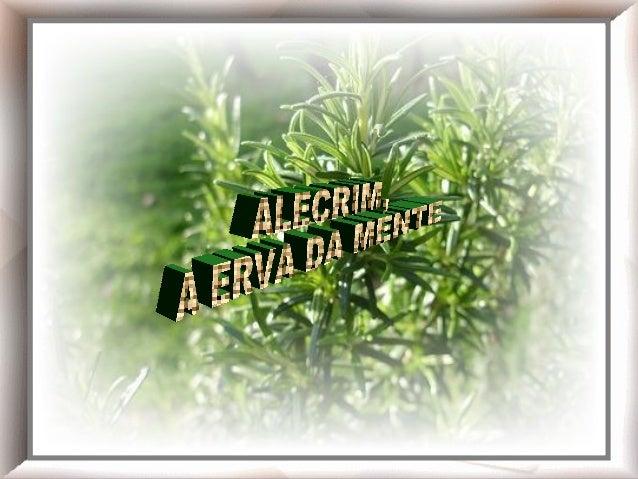 Chá de alecrim!  Alecrim
