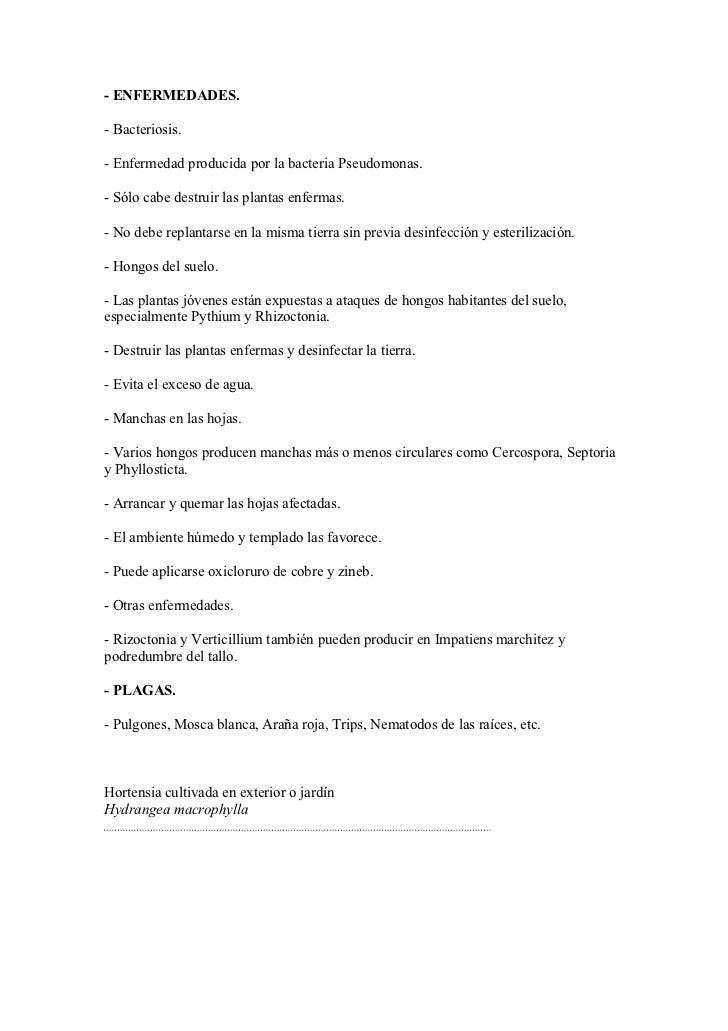 hortensias enfermedades Alegras Y Hortensias