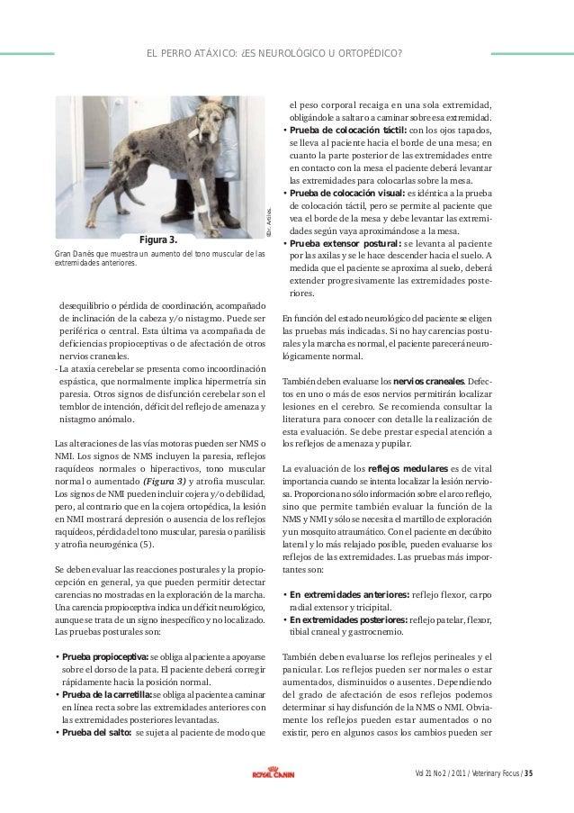 El perro atáxico: ¿es neurológico u ortopédico?