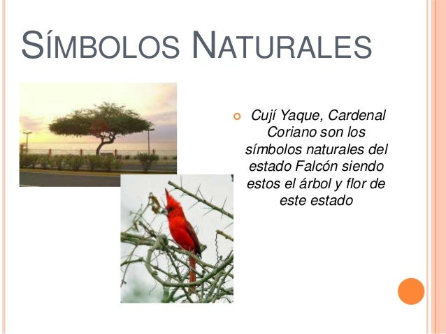 Simbolos Naturales De Coro | falcon padilla alejandro 3ro c