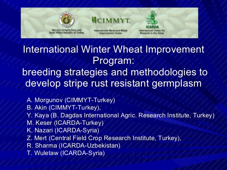 International Winter Wheat Improvement Program:  breeding strategies and methodologies to develop stripe rust resistant ge...