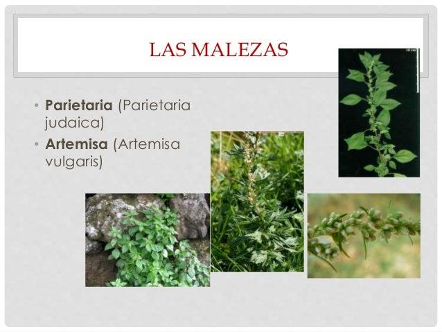 Alergia Y Efermedades Alergicas