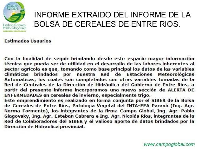 www.campoglobal.com INFORME EXTRAIDO DEL INFORME DE LA BOLSA DE CEREALES DE ENTRE RIOS.