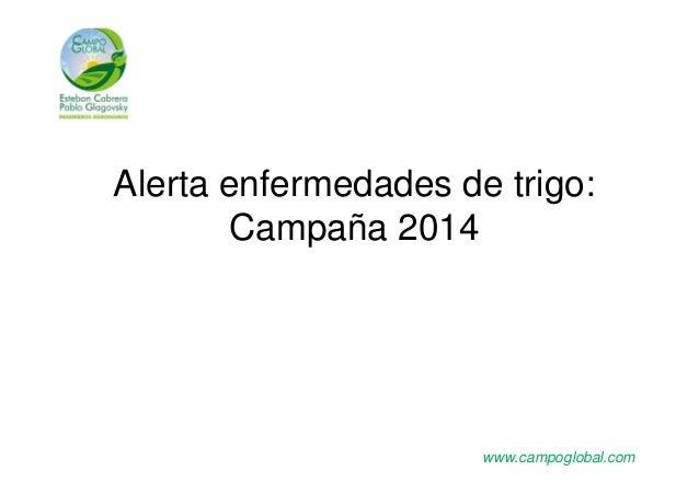 Alerta enfermedades de trigo:  Campaña 2014  www.campoglobal.com