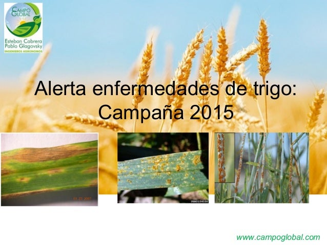 www.campoglobal.com Alerta enfermedades de trigo: Campaña 2015