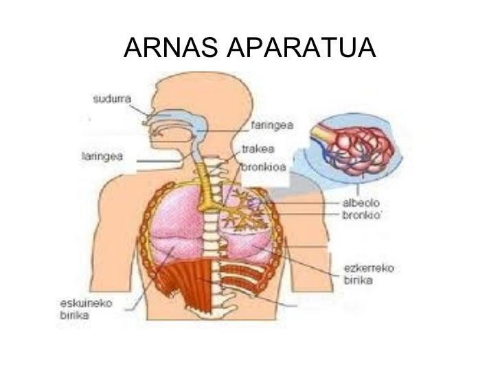 ARNAS APARATUA