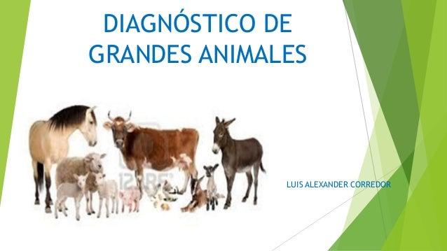 DIAGNÓSTICO DE GRANDES ANIMALES  LUIS ALEXANDER CORREDOR