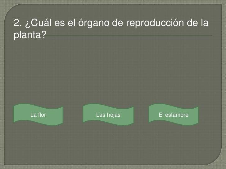 2. ¿Cuál es el órgano de reproducción de laplanta?   La flor        Las hojas    El estambre