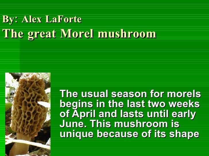 By: Alex LaForte   The great Morel mushroom The usual season for morels begins in the last two weeks of April and lasts un...