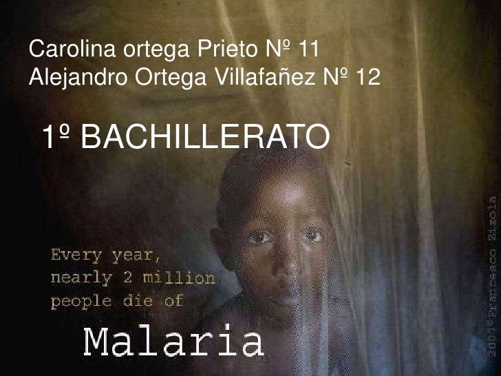 Carolina ortega Prieto Nº 11<br />Alejandro Ortega Villafañez Nº 12<br />1º BACHILLERATO<br />