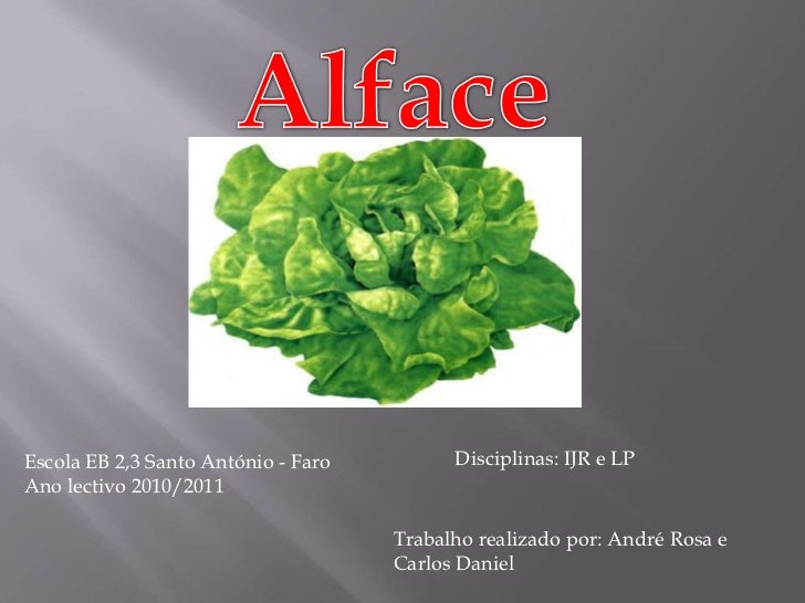 Alface<br />Escola EB 2,3 Santo António - Faro<br />Ano lectivo 2010/2011<br />Disciplinas: IJR e LP<br />Trabalho realiza...
