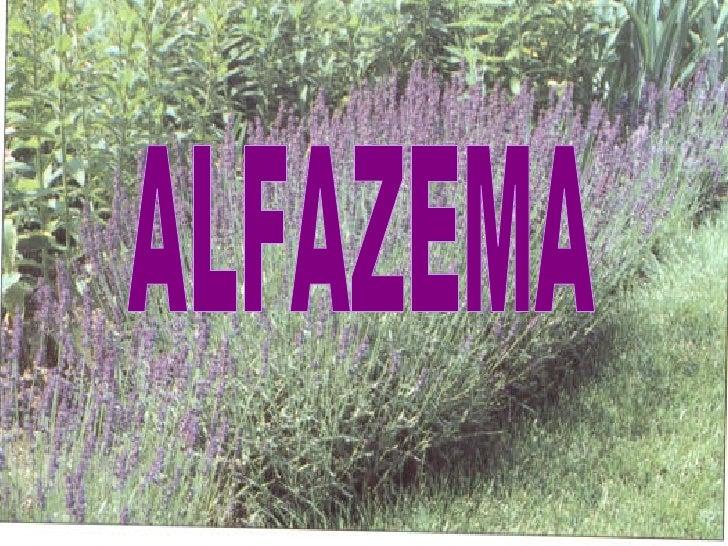 ALFAZEMA
