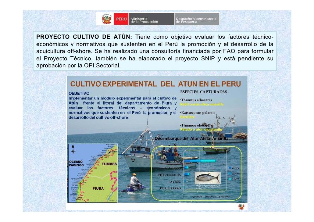 PROYECTO CULTIVO DE ATÚN: Tiene como objetivo evaluar los factores técnico- económicos y normativos que sustenten en el Pe...