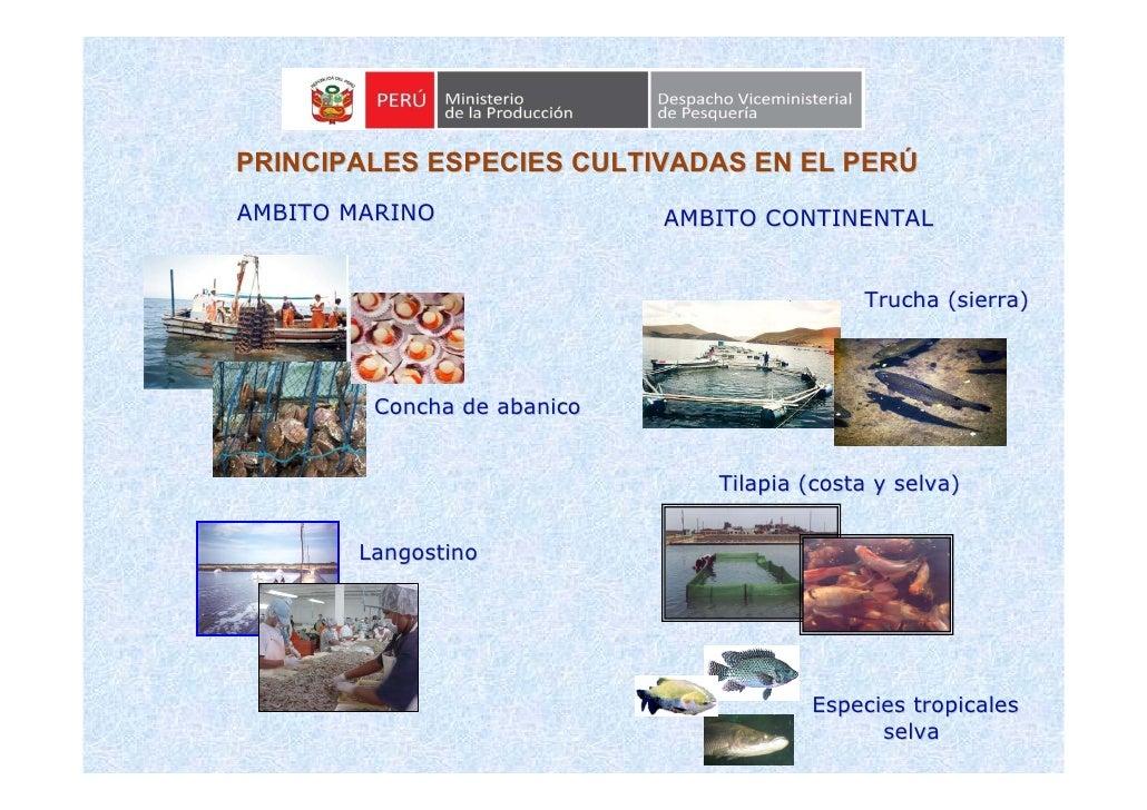 PRINCIPALES ESPECIES CULTIVADAS EN EL PERÚ AMBITO MARINO               AMBITO CONTINENTAL                                 ...