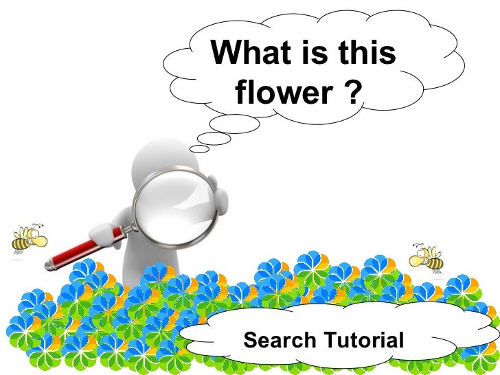 What is this  flower ?       Search Tutorial