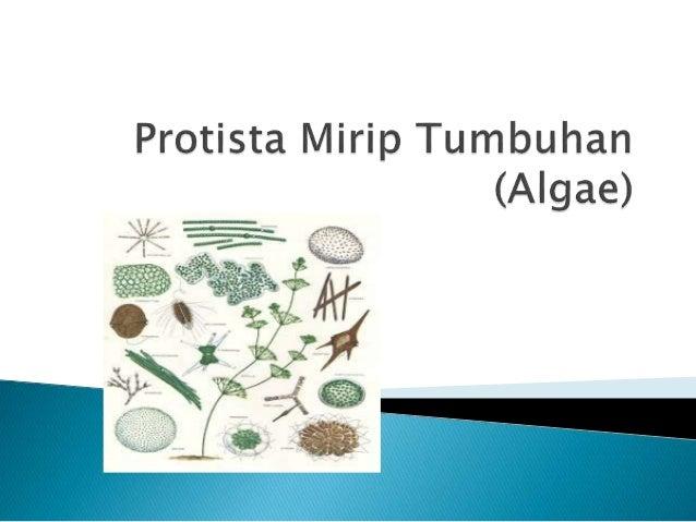 protista mirip tumbuhan