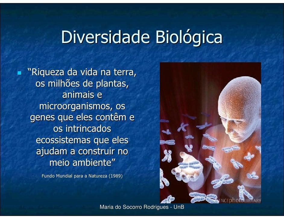 """Diversidade Biológica """"Riqueza da vida na terra,   os milhões de plantas,         animais e    microorganismos, os  genes ..."""