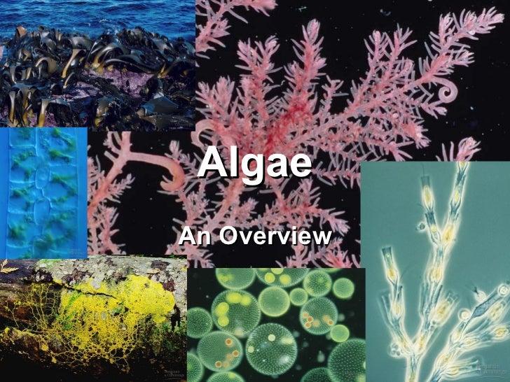 AlgaeAn Overview