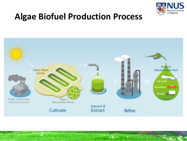 production of biofuels One of the great benefits of using biomass for energy production is  activities related to bioenergy and biofuels are receiving attention.