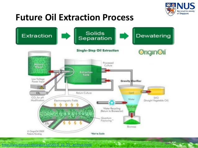 ALGAE OIL EXTRACTION PDF DOWNLOAD