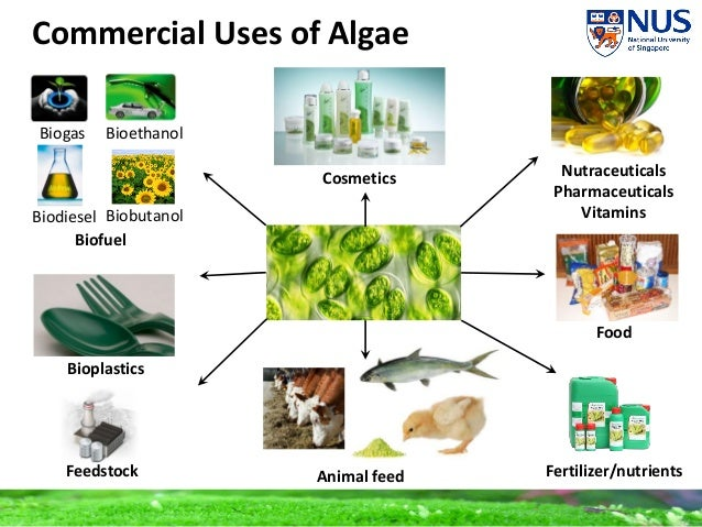 algae biofuel It's hard to think of a humbler organism than algae, or a less-likely prospect to become savior of our energy future algae fuel does not conjure up images of power, big business or high-tech gadgetry it suggests a modest picture of a murky pond covered by a greasy, greenish film.