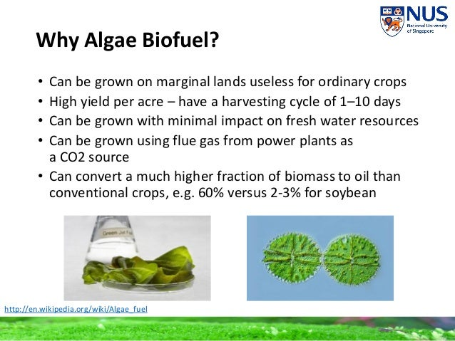 plausibility of algae biofuel essay Research paper - download as word doc major research for biofuel production from algae began in the 1980 s due to the oil shortages in the united states.