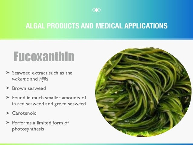 Algae Products And Their Medical Applications