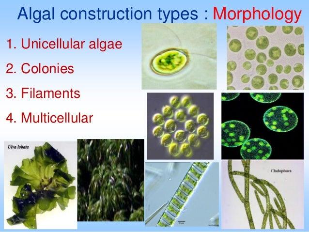 Bacteria, protists, algae, and marine plants ppt video online.
