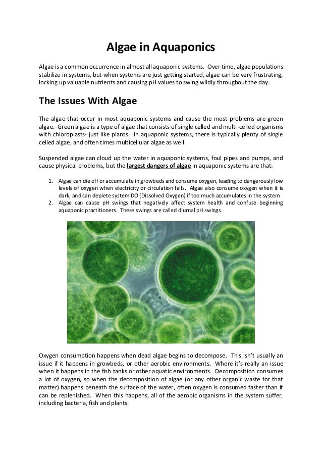 Algae in Aquaponics Algae is a common occurrence in almost all aquaponic systems. Over time, algae populations stabilize i...