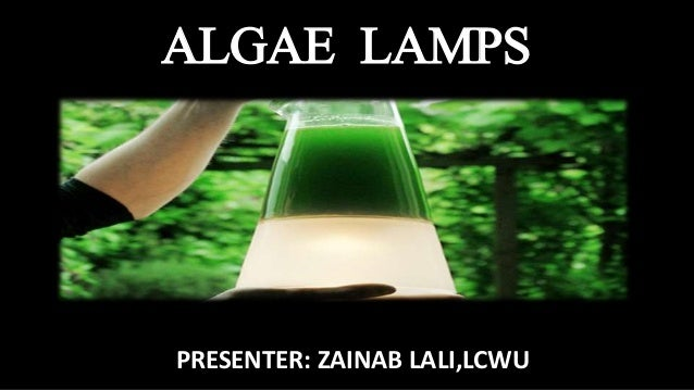 ALGAE LAMPS PRESENTER: ZAINAB LALI,LCWU ...