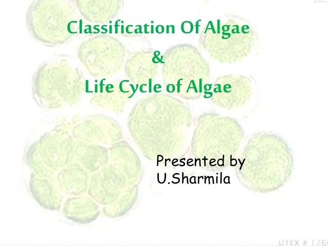 Classification Of Algae & Life Cycle of Algae Presented by U.Sharmila