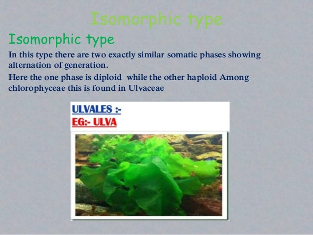 Diplobiontic type Diplobiontic type This type of life cycle is found in almost all Rhodophyceae except Nemalionales.The mo...